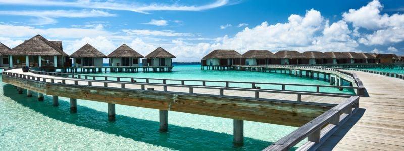 Malediivit Napsu