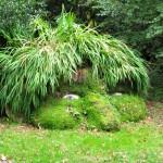 Cornwallin viidakon omituiset otukset - Heliganin hulppea puutarha oli kadoksissa kymmeniä vuosia