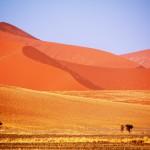 Mystinen Namibin aavikko - Karu, kuiva, kuuma ja hämmentävän kaunis