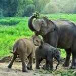 """Viisi vinkkiä eettisempään """"norsuturismiin"""" Thaimaassa"""