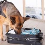 Mitä tapahtuu lentokentällä takavarikoidulle ruualle?