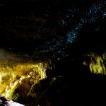 Waitomon luolien katossa tuikkivat tuhannet tähdet – Uudessa-Seelannissa retki kiiltomatoluolaan on elämys!