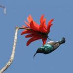 Yli 550 lintulajia - Gambia on muutakin kuin rantalomaa täysihoidolla