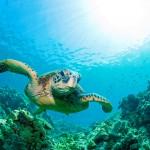 Huolehdi roskistasi myös kesälomareissussa! Välimeri on muuttumassa vaaralliseksi muovimereksi