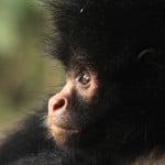 Jopa yli sata kokonaan uutta lajia! Boliviasta löytyi biologiselta monimuotoisuudeltaan maailman rikkain paikka