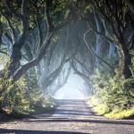 Myrskyssä kaatuneiden puiden uusi elämä - Doors of Thrones kutsuu Game of Thronesin ystävät pubikierrokselle