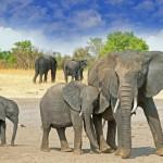 Unelmana nähdä norsu, leijona ja kirahvi? Viisi hyvää safarikohdetta Afrikassa