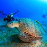 Viisi hyvää syytä viettää sukellusloma Egyptissä