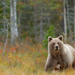 Suomi houkuttelee ulkomaisia turisteja - Puhtaan luonnon lisäksi haetaan kulttuuria ja ostoksia